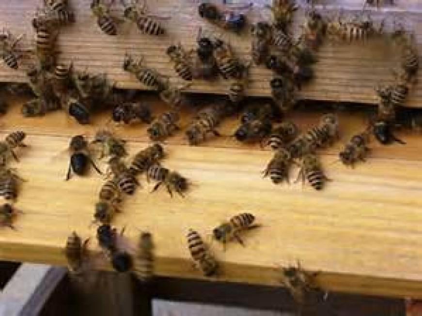 2月25,26日ニホンミツバチの巣箱作りのWS
