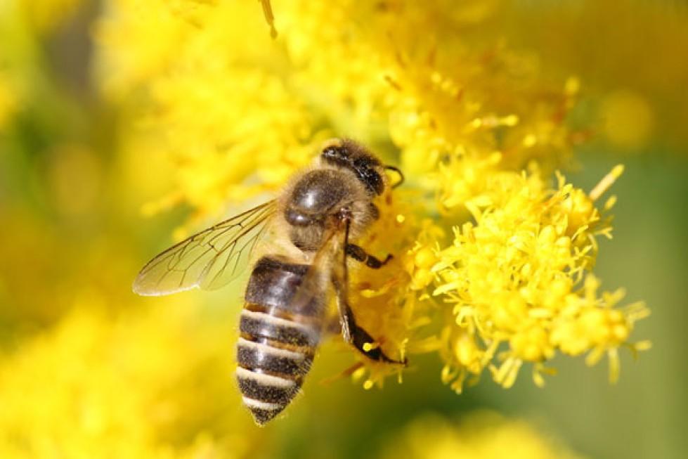 ニホンミツバチを通して見える自然