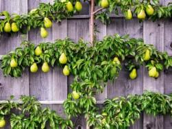庭がコンパクトでも果物が収穫できる樹を育てたい!